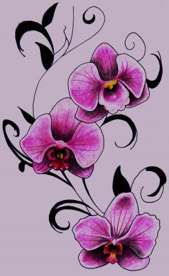 Drawn orchid pencil crayon Ink Colored Sewell cần Orchids