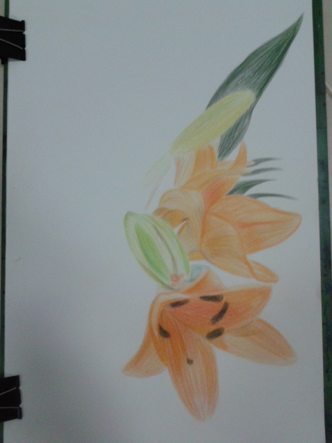 Drawn orchid pencil crayon Flowers plants Drawing Course the