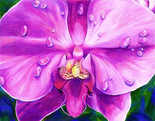 Drawn orchid pencil crayon Purple pencil dew colored close