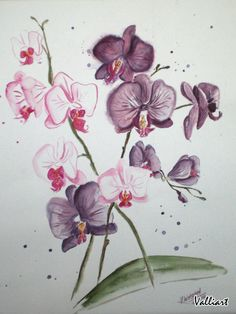 Drawn orchid pencil crayon Search drawings and  drawing