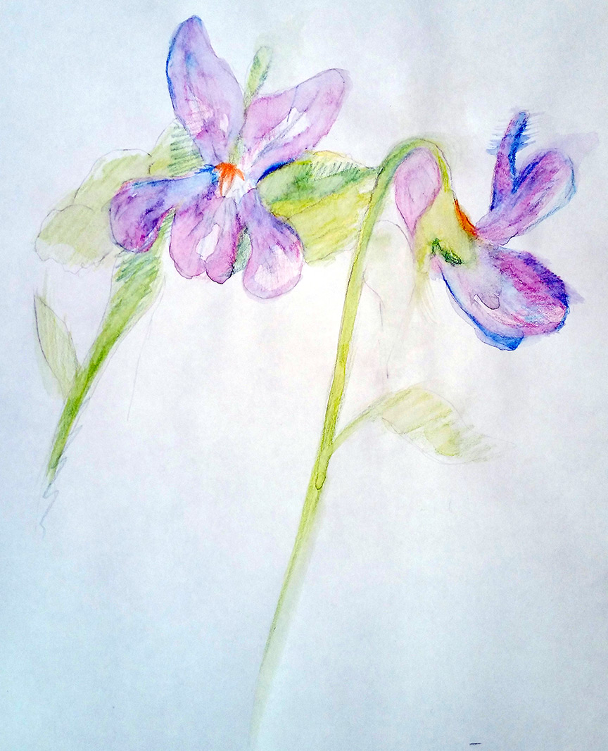 Drawn orchid pencil crayon And drawing and drawing watercolor