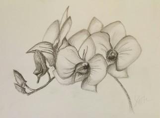 Drawn orchid pencil crayon Drawing 2015 Drawings Original Testa