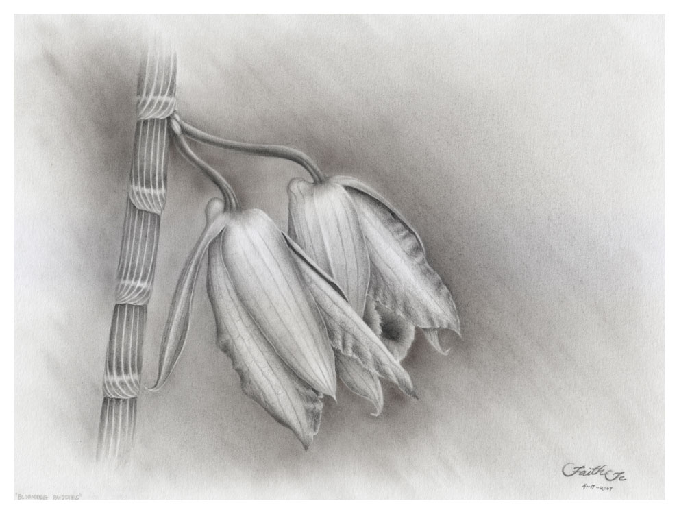 Drawn moth charcoal pencil Drawing Blooming in Te by