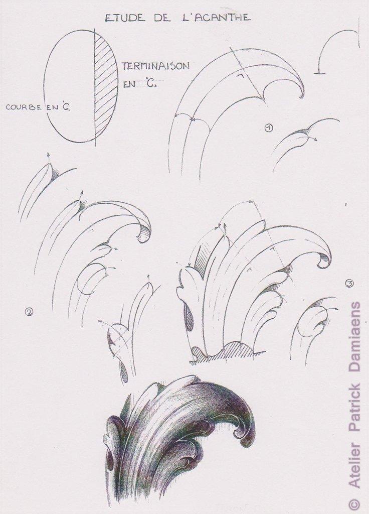 Drawn ornamental drawing Patrick Patrick WOODCARVER ACANTHUS