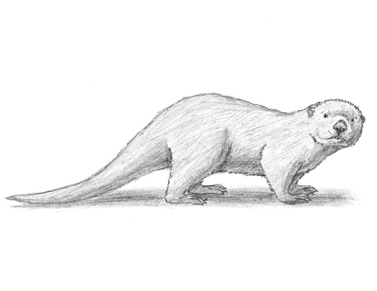 Drawn otter To Otter More ciuchy Otter