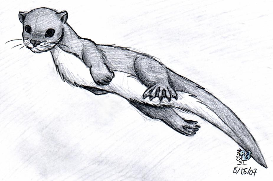 Drawn otter Otter Snowlion Snowlion by DeviantArt