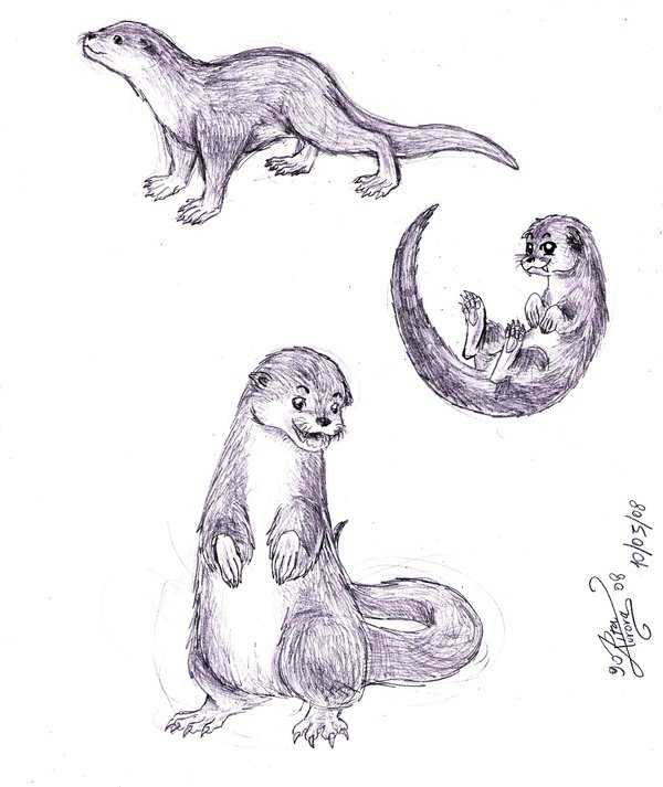 Drawn otter Otter Sea DeviantArt Pinkyri on