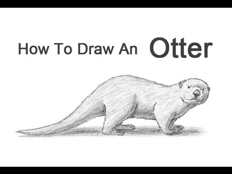 Drawn otter How an YouTube  to
