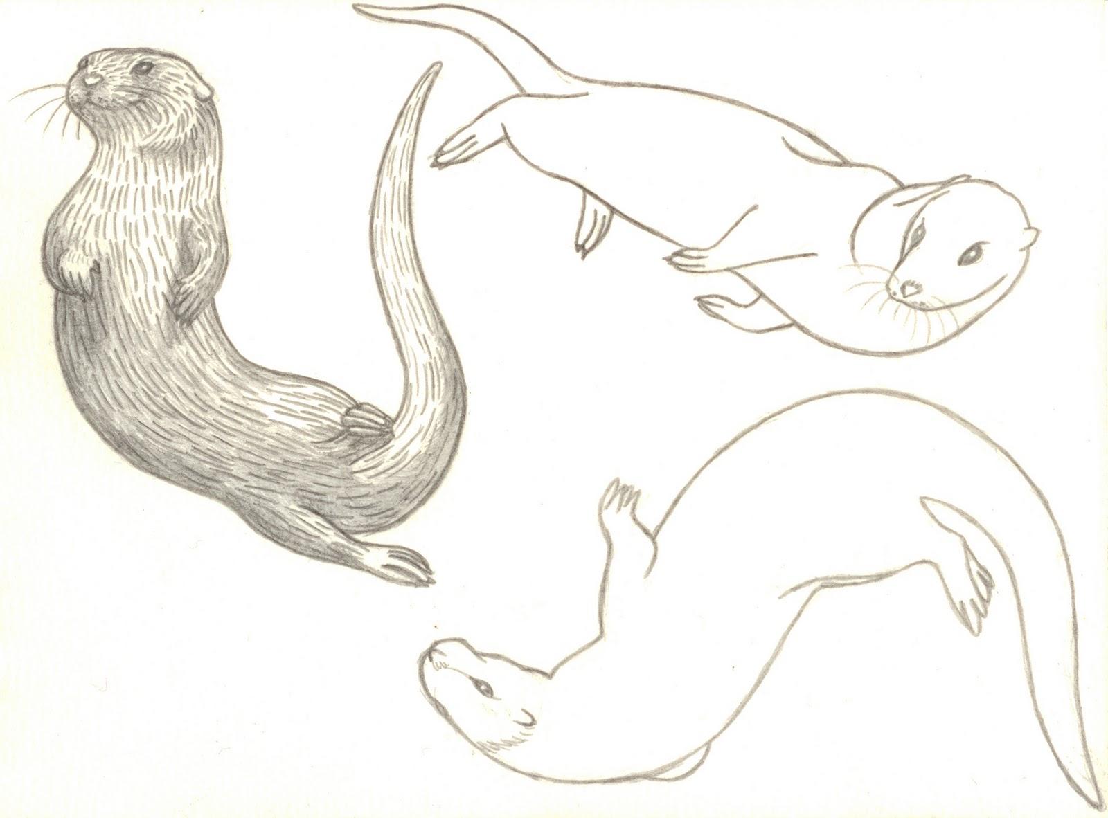 Drawn otter Swimming com com  Drawing