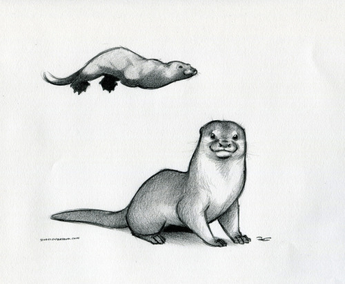 Drawn otter Am mistakingwaterforair I your are