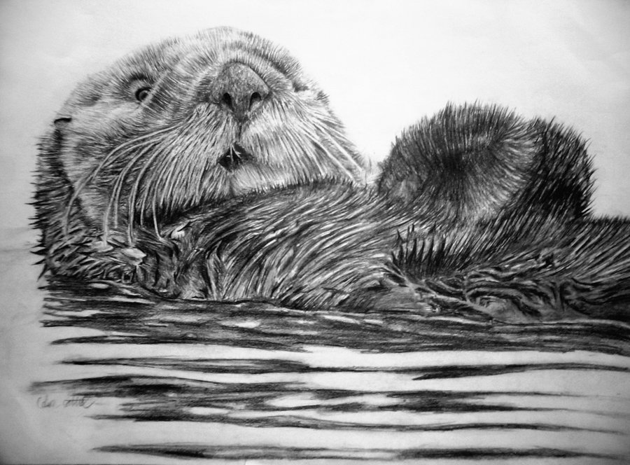 Drawn otter pencil drawing By DeviantArt Bolbec on Otter