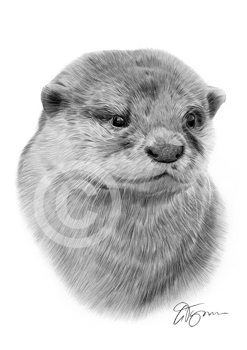 Drawn otter pencil drawing Pencil Pencil drawing of Gary
