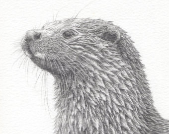 Drawn otter pencil drawing Drawing pencil drawing Otter original