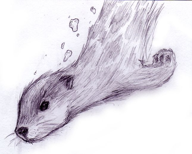 Drawn otter pencil drawing Otter Art Pinterest Google drawing