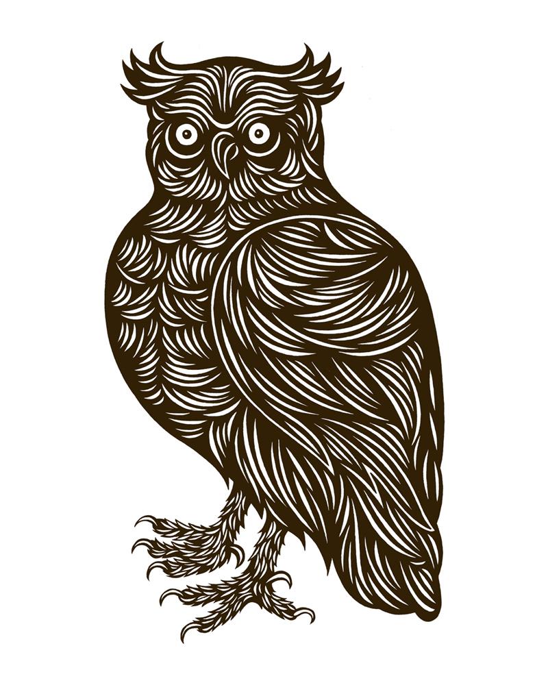 Drawn owlet & Art Drawn PNW Outdoor