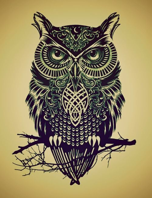 Drawn owlet Images Tattoos more The about