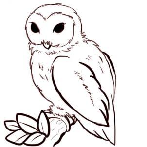 Drawn owlet #5