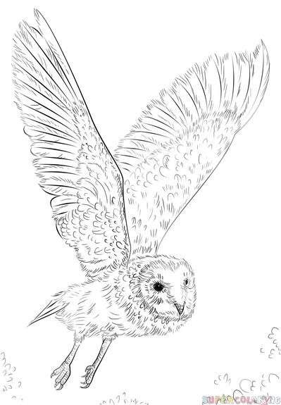 Drawn owl barn owl How barn a by step
