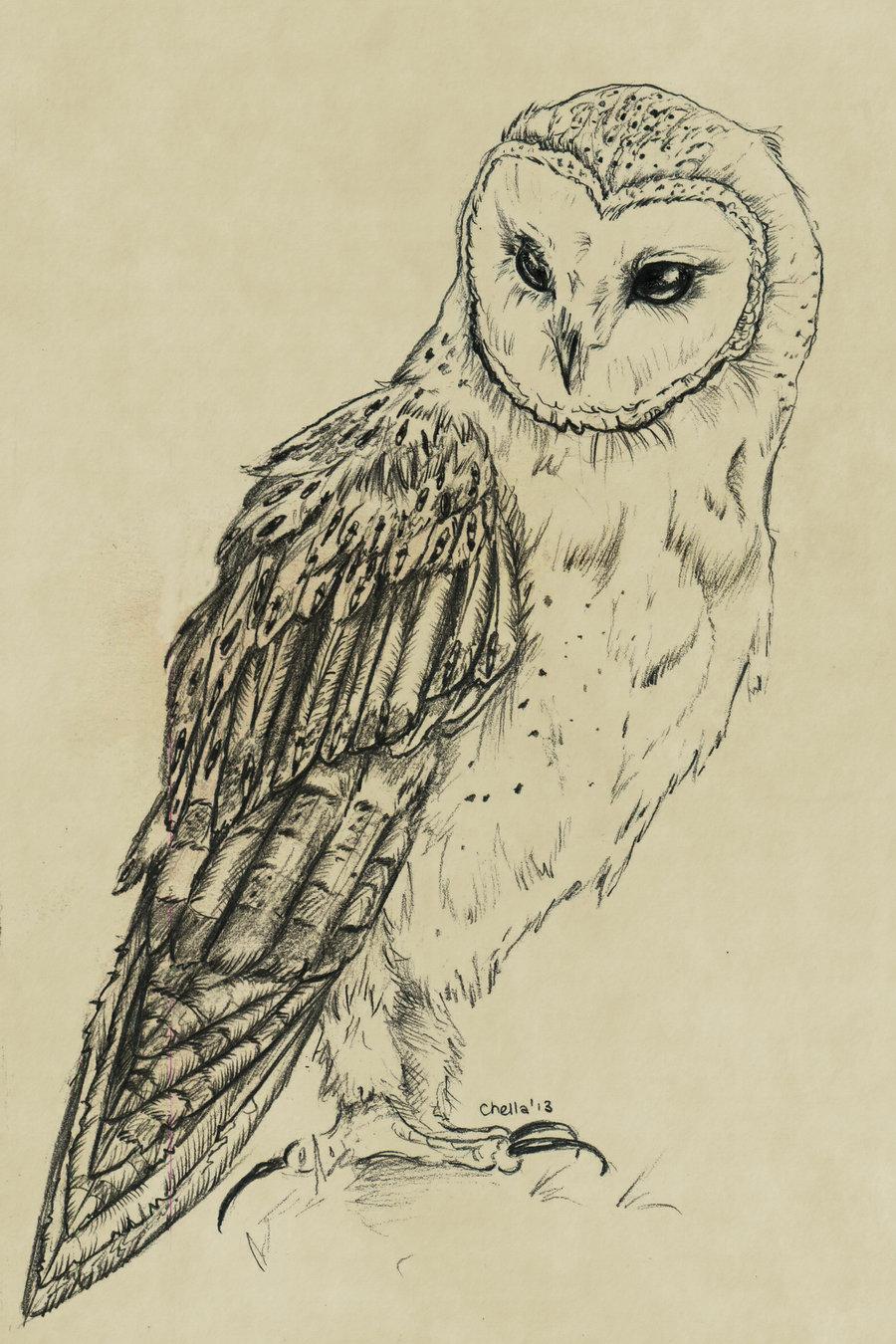 Drawn owl barn owl Owl Google drawing / Illustrations