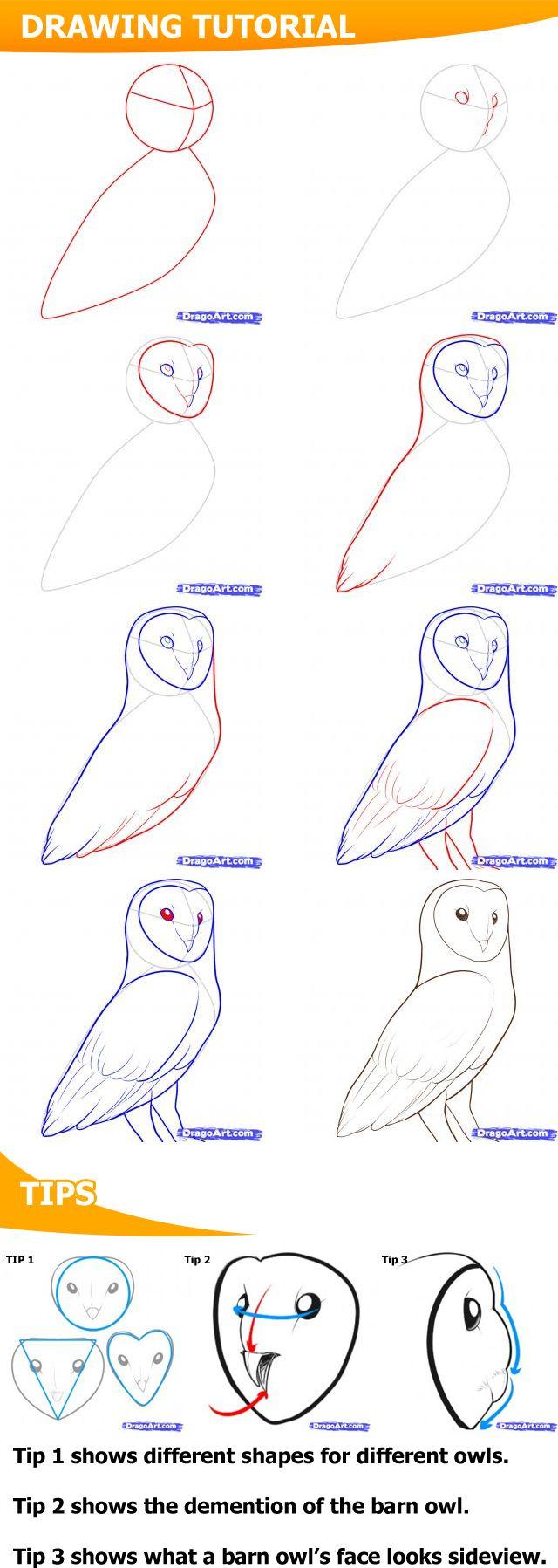 Drawn owl barn owl  Barn owls 25+ Pinterest