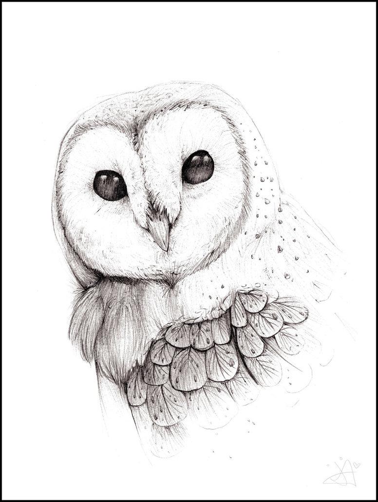 Drawn owl barn owl Barn The by Pinterest Owl