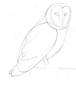 Drawn owl barn owl  Online how Draw a