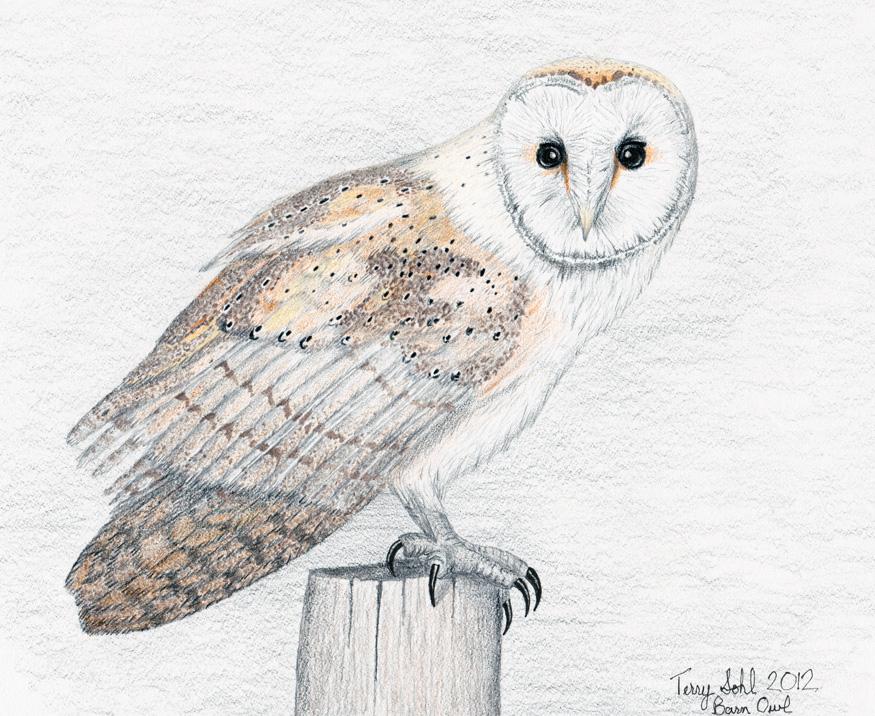 Drawn owl barn owl Barn by Terry Drawing Owl