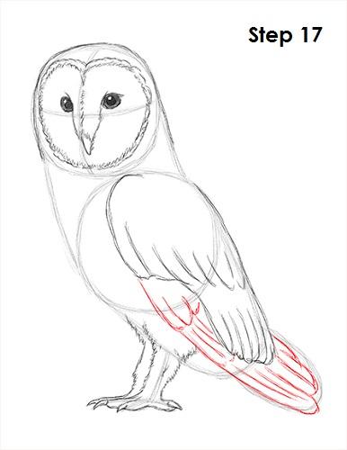Drawn owl barn owl Draw 17 How Owl a