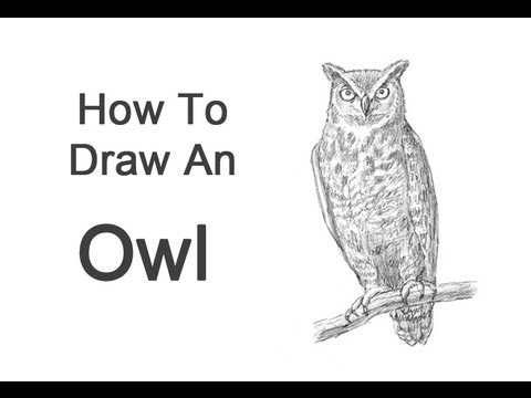 Drawn owl beginner Draw Horned) to (Great YouTube