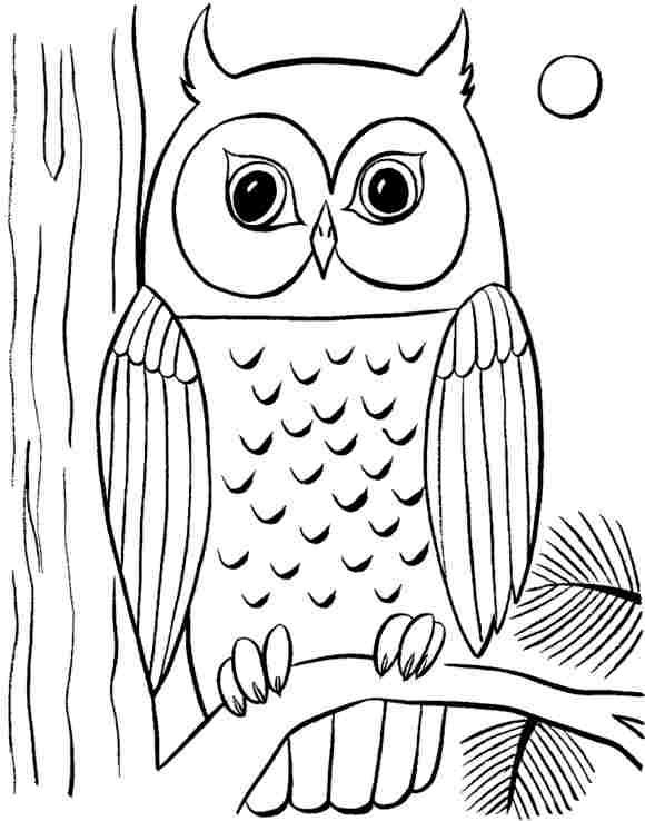 Drawn owl bird On To Six An Easy