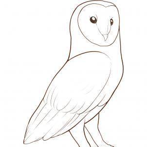 Drawn owl bird Images Barn Pinterest FREE a