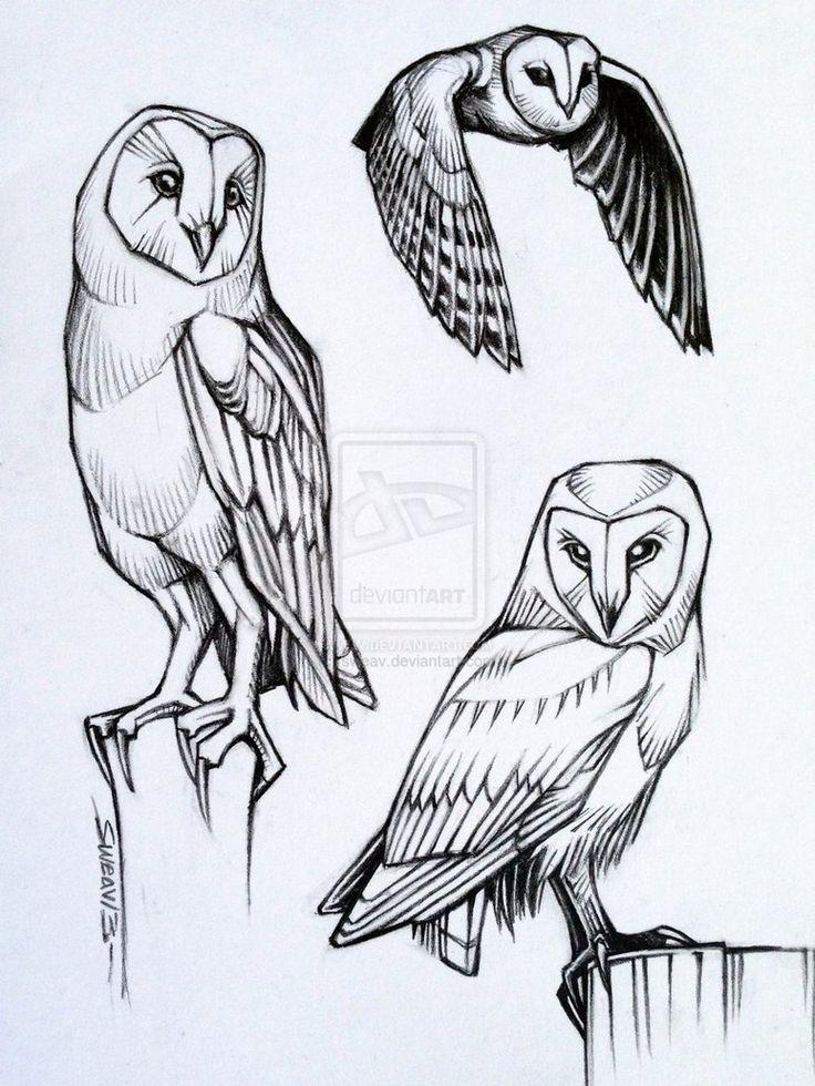Drawn owl bird Sweav ideas by Barn Owl
