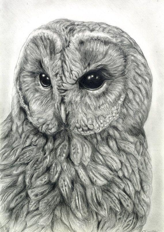 Drawn owl bird Tawny Graphite Pinterest ideas Tawny