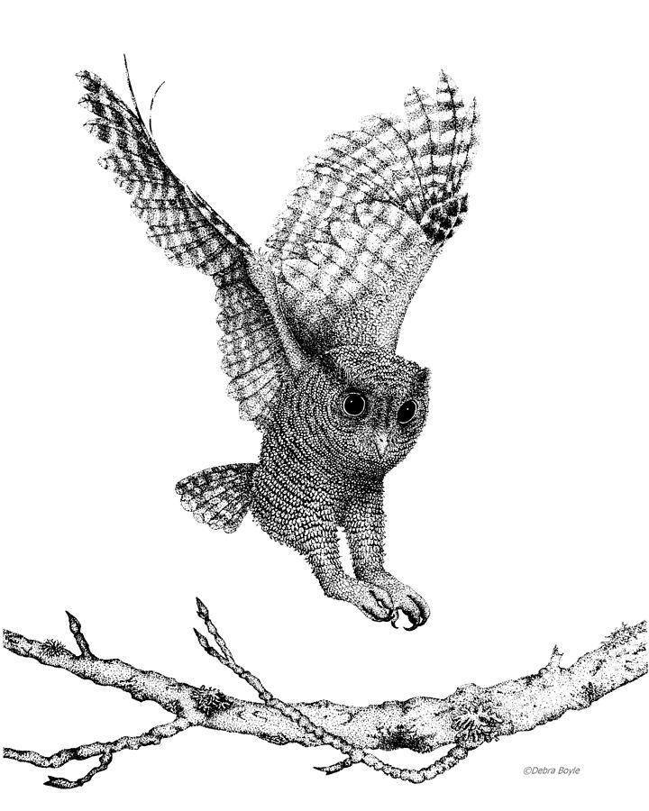 Drawn owl bird Drawing Landing owl landing Drawings