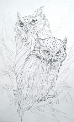 Drawn owl east Sketches Pin more Pencil on