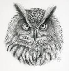 Drawn owl face Pinterest owl result face Image