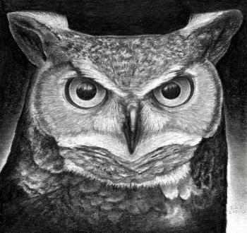 Drawn owl face Owl Pinterest a how great