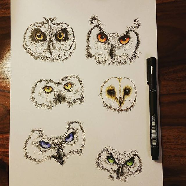 Drawn owl face Animal #owl @deanwrighty #faces A
