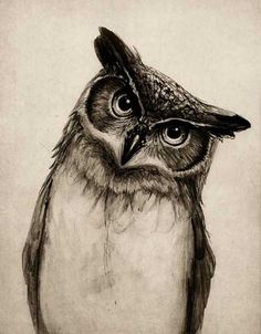 Drawn owl face  Drawing tattoo owl Realistic