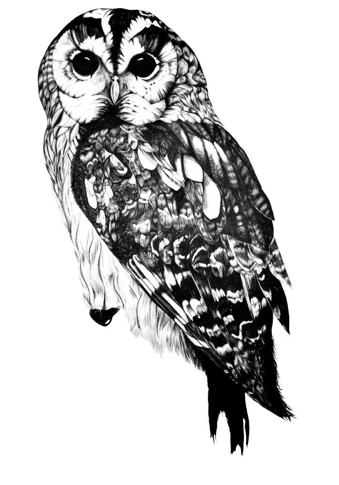 Drawn owlet graphic design black I rights Ella lovely