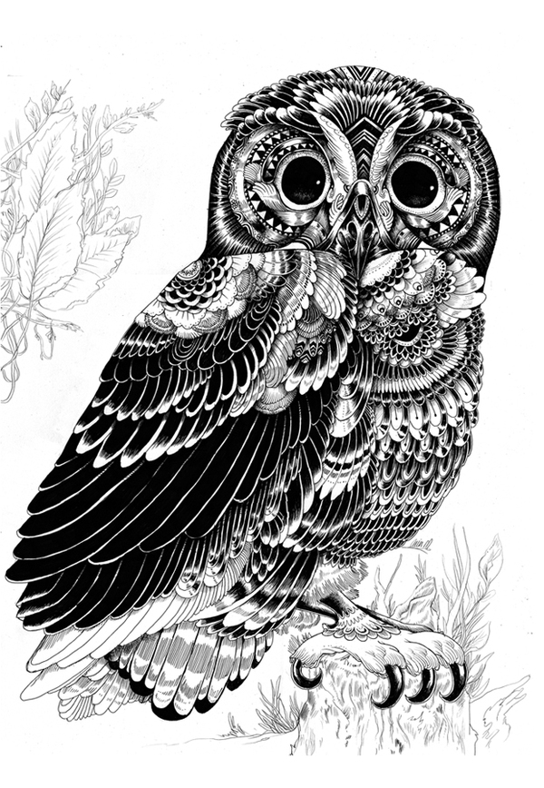 Drawn owlet graphic design black Design Macarthur Ian » or