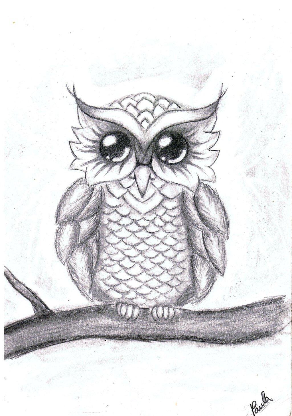 Drawn owl little owl Drawings Drawings of Cute cute