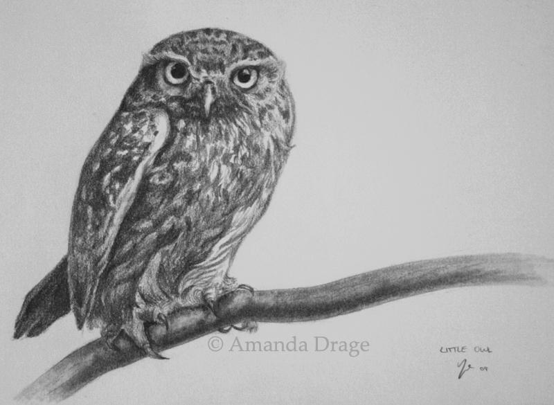 Drawn owl little owl Owl AmandaDrage by DeviantArt AmandaDrage