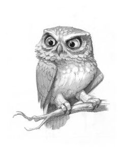 Drawn owl little owl Little barn artist angry drawing
