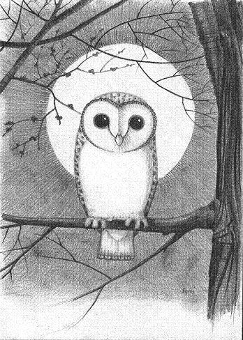 Drawn owl moon Drawings Best owl >