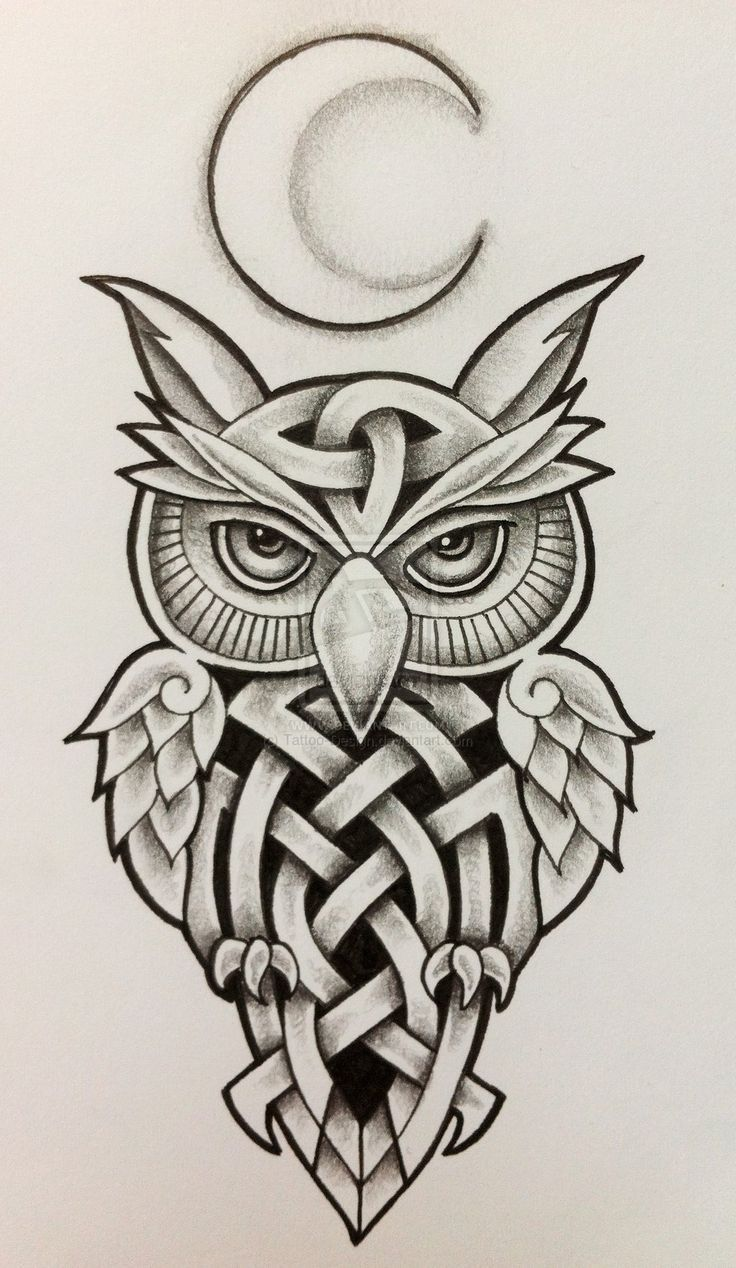 Drawn owl moon On and best Moon OWL
