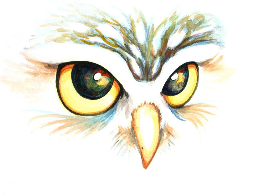 Drawn owl nature #10