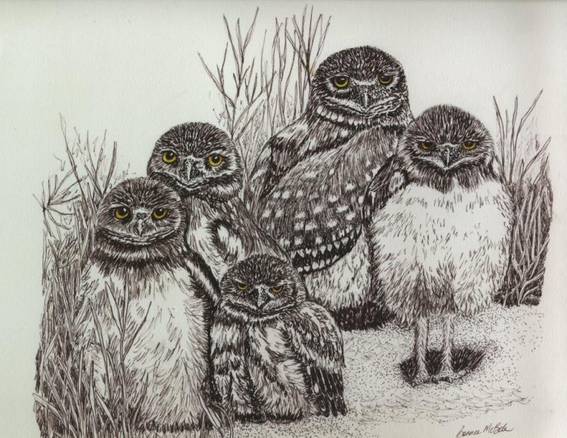 Drawn owl nature #4