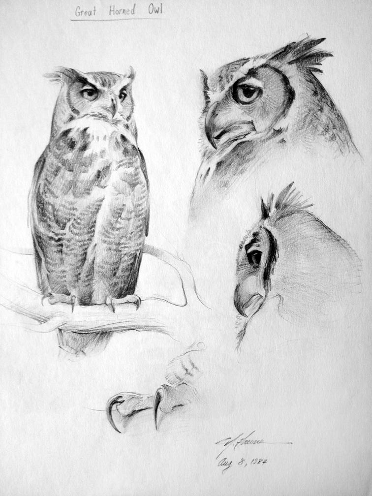 Drawn owl nature #5