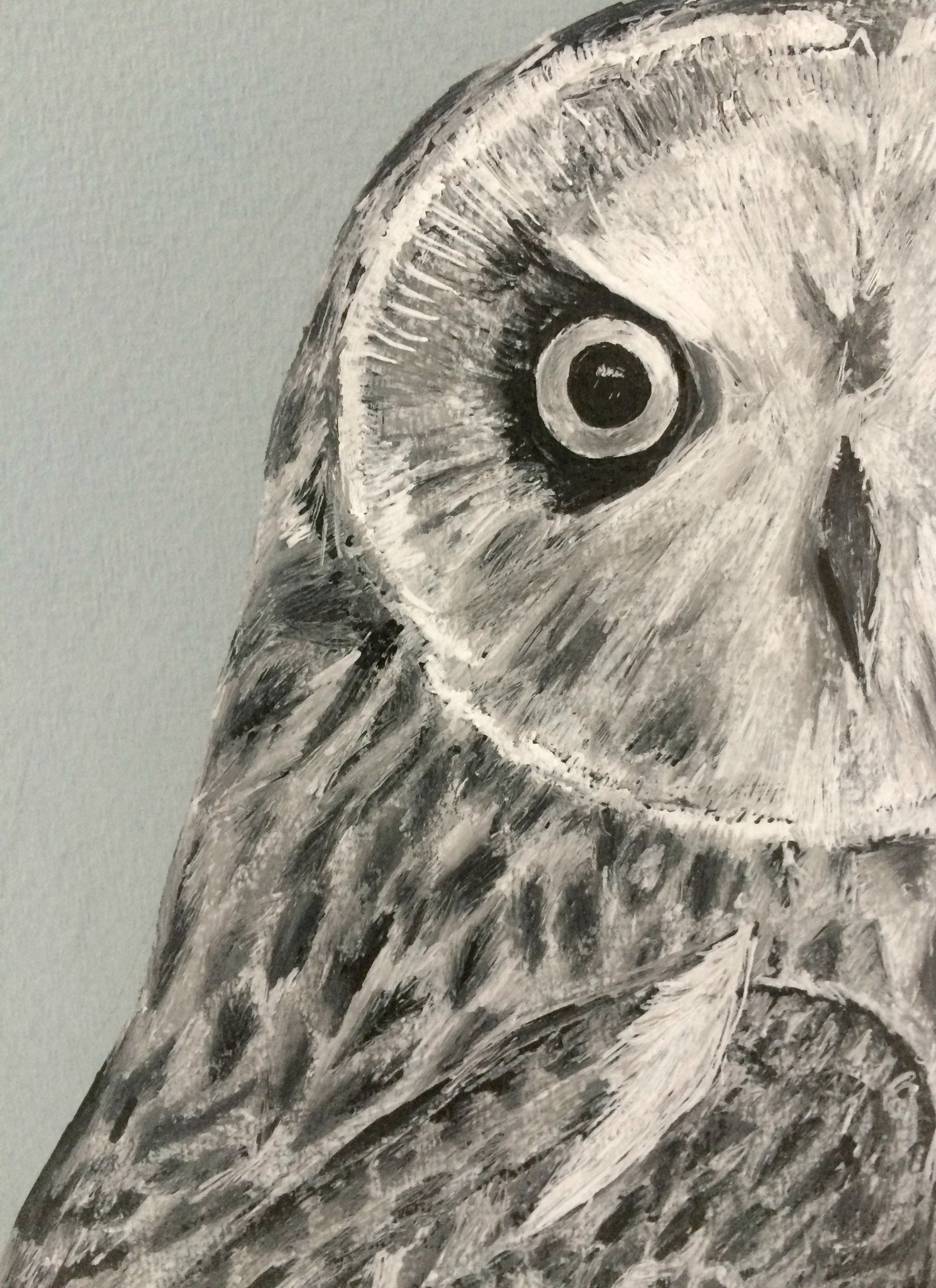 Drawn owl owel Drawing Original Short Short –